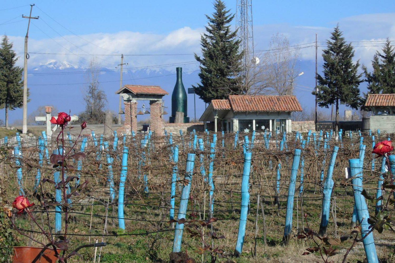 Georgian wine tours
